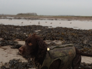 Dog with Decoys out on the foreshore. Shooting a tidal pool.